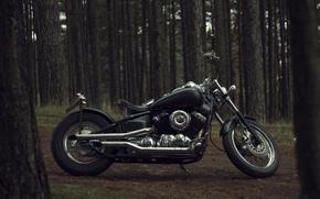 Картинка деревья, природа, дизайн, мотоцикл, байк