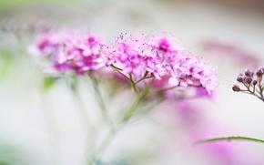 Картинка макро, цветы, размытость