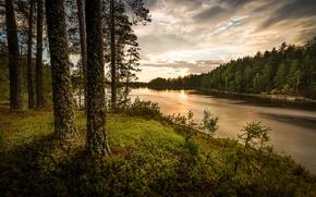 Обои вечер, река, лес