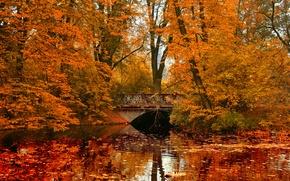 Обои мост, река, парк, отражение, осень