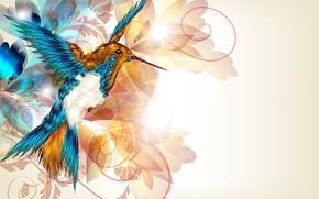 Обои птичка, колибри, крылья, клюв, вектор