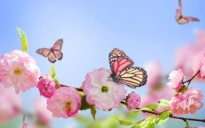 Картинка flowers, spring, butterflies, blue, розовый, blossom, pink, бабочки, цветение, голубое небо, sky, весна