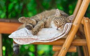 Обои кот, стул, лето, одеяло, спит, настроение, боке, размыто, полосатый, леджит, лень, фон, серый, зеленый, кошка