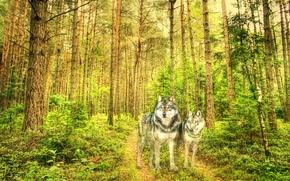 Картинка лес, стиль, текстура, волки