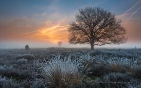 Картинка иней, трава, дерево, весна, утро, мороз, Нидерланды, Март, провинция Северный Брабант