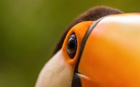 Картинка макро, глаз, птица, клюв, тукан