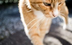 Картинка кот, усы, фон, кошак, котяра