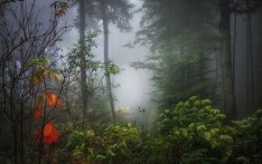 Картинка осень, лес, листья, туман