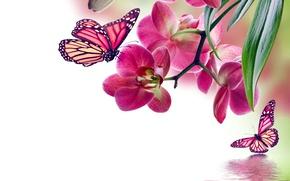 Butterflies орхидея обои фото картинки