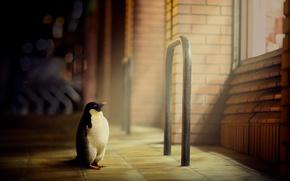 Картинка улица, пингвин, город