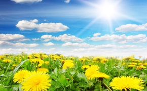 Картинка небо, солнце, весна, одуванчики