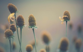Картинка макро, цветы, боке