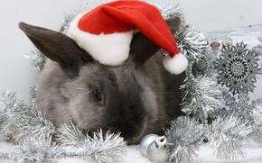 Картинка шапка, кролик, Новый год