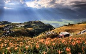 Картинка цветы, лучи, свет, горы, природа, деревья, дом, поле, Taiwan, холмы, небо, долина, облака