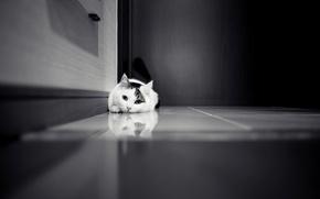 Картинка кошка, кот, дверь, кафель, черно-белое, белая, шкаф