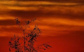 Картинка небо, облака, дерево, силуэт, зарево