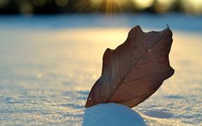 Картинка зима, снег, лист