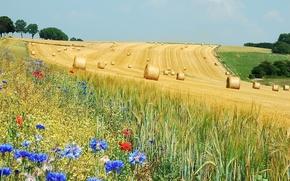 Картинка поле, цветы, ролы