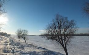Картинка зима, снег, дерево, набережная, Волга
