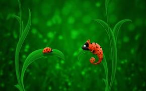 Обои Зелёный, Оранжевый, Божья Коровка, Хамелеон