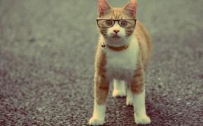 Картинка кот, животное, рыжий, очки, ошейник