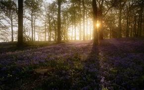 Картинка лес, весна, утро