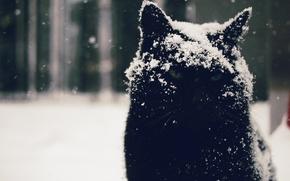 Картинка глаза, кот, взгляд, снег, фон, котэ, угрюмый