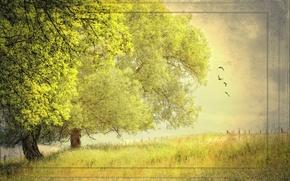 Картинка лето, деревья, природа, стиль, фон