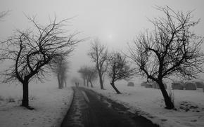 Обои дорога, деревья, зима