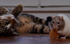 Картинка кот, усы, кошак, крыса, котяра