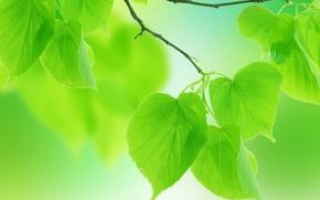 Обои макро, лепестки, веточки, природа, лето, зеленые листья