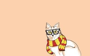 Картинка кошка, кот, минимализм, шарф, очки, хипстер