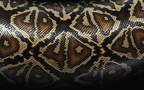 Обои текстура, змеи, шкура