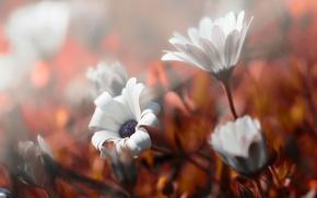 Картинка осень, цветы, природа
