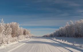 Картинка зима, иней, небо, птица, елки, Дорога, мороз, кедры