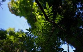 Картинка небо, листья, макро, деревья, ветки, природа, зеленые