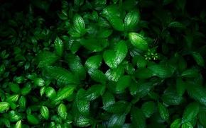 Картинка зелень, трава, цветы, природа, мокрая, кусты