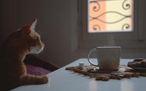 Картинка кот, окно, рыжий, чашка