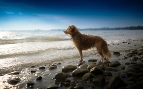 Картинка море, взгляд, собака