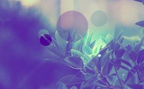 Обои листья, деревья, круги, полосы, Абстракции