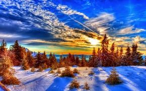Картинка зима, лес, небо, облака, снег, деревья, закат, ель