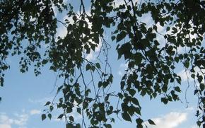 Картинка небо, облака, ветки, природа, Весна, воздух, май, береза