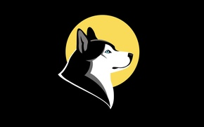 Картинка собака, минимализм, husky, хаски. dog