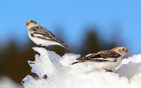 Картинка зима, небо, снег, птица, клюв