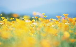 Картинка лето, солнце, цветы, природа, поляна, желтые, размытость