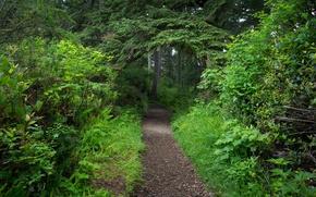 Картинка зелень, лес, природа, green, дорожка, forest, Nature, path