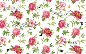 Обои буквы, пион, природа, цветы, надписи, peony
