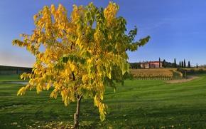 Картинка поле, осень, небо, трава, листья, дерево, дома, холм, Италия, Тоскана