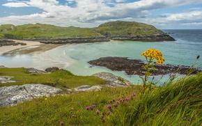 Картинка море, небо, трава, облака, цветы, камни, побережье, размытие, Шотландия, горизонт, возвышенность