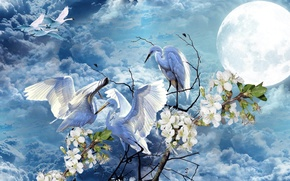 Картинка небо, цветы, луна, Весна, лебеди, аисты